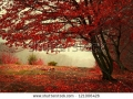 stock-photo-beautiful-autumn-day-into-the-forest-121006426