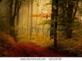 stock-photo-beautiful-forest-during-a-foggy-autumn-day-late-autumn-in-november-121119739