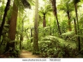 stock-photo-beautiful-lush-forest-76818022