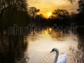 stock-photo-beautiful-sunrise-in-the-vondelpark-in-amsterdam-the-netherlands-145696040