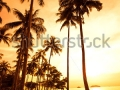 stock-photo-coconut-palms-on-sand-beach-in-tropic-on-sunset-thailand-koh-chang-kai-bae-beach-41610499