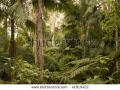 stock-photo-conondale-national-park-queensland-australia-about-km-north-of-brisbane-inland-from-the-41819422