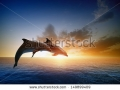 stock-photo-couple-jumping-dolphins-beautiful-sea-sunset-149899409