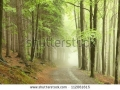 stock-photo-forest-path-on-the-border-between-coniferous-and-deciduous-trees-112061615