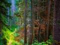 stock-photo-forest-trail-in-autumn-at-durau-in-the-carpathian-mountains-romania-121709113