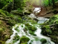 stock-photo-forest-waterfall-and-rocks-covered-with-moss-112449761