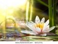 stock-photo-lotus-flower-background-92515741
