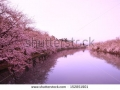 stock-photo-moat-and-cherry-blossoms-of-hirosaki-castle-aomori-japan-152851901