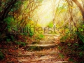 stock-photo-morning-sun-rays-shine-on-forest-pathway-115025212
