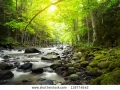 stock-photo-mountain-river-in-the-wood-118774642