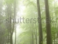 stock-photo-mountain-trail-in-the-spring-beech-forest-on-a-foggy-rainy-day-69070132