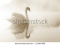 stock-photo-mute-swan-cygnus-olor-gliding-across-a-mist-covered-lake-at-dawn-119987908