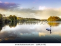 stock-photo-picture-of-a-swan-on-a-lake-in-the-scottish-highlands-116810332