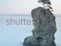 stock-photo-portofino-natural-regional-park-lonely-pine-tree-coastal-rock-beach-long-exposure-photography-115917058