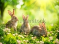 stock-photo-rabbits-beauty-art-design-of-cute-little-easter-bunny-in-the-meadow-spring-flowers-and-green-146078894