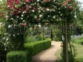 stock-photo-rose-arch-in-english-country-garden-68047558