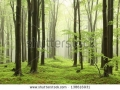 stock-photo-spring-beech-forest-in-the-mountains-of-the-southern-polish-138616931