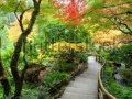 stock-photo-the-autumnal-look-of-the-japanese-garden-inside-the-famous-historic-butchart-gardens-built-in-62252686