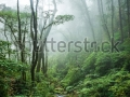 stock-photo-the-beautiful-scene-of-tropical-rain-forest-at-doi-inthanon-national-park-thailand-134644901