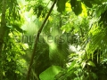 stock-photo-tropical-forest-trees-in-sunlight-and-rain-110631224