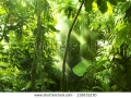stock-photo-tropical-forest-trees-in-sunlight-and-rain-110631230