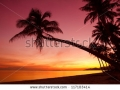 stock-photo-tropical-sunset-with-palm-trees-silhouette-at-beach-117103414