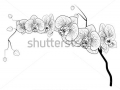stock-vector-phalaenopsis-orchid-contour-image-94984966