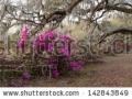 stock-photo-azalea-panorama-at-the-magnolia-plantation-in-charleston-sc-142843849