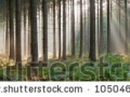 stock-photo-panorama-landscape-of-forest-in-the-mist-with-sun-rays-magical-beauty-drentsche-aa-drenthe-the-105046493