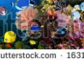 stock-photo-sea-corals-panorama-163122269