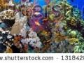 stock-photo-underwater-corral-panorama-fish-131842865
