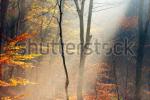 stock-photo-autumn-landscape-of-a-forest-with-fog-73660153