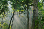 stock-photo-autumn-sunlight-breaks-through-the-trees-140033584