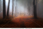 stock-photo-beautiful-forest-during-a-foggy-autumn-day-late-autumn-in-november-121119742
