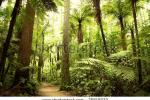 stock-photo-beautiful-lush-forest-76818022
