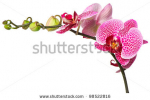 stock-photo-beautiful-orchid-flower-on-white-background-98522816