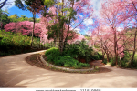 stock-photo-cherry-blossom-path-in-a-curve-road-111519965