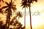 stock-photo-coconut-palms-on-sand-beach-in-tropic-on-sunset-thailand-koh-chang-kai-bae-beach-41610499