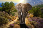 stock-photo-elephant-walking-on-the-road-at-sunset-114550492