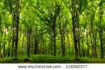 stock-photo-forest-trees-nature-green-wood-sunlight-backgrounds-116262577