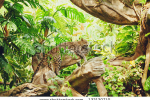 stock-photo-lying-sleeping-leopard-on-tree-branch-in-the-forest-jungle-132120710