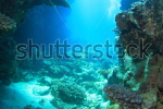 stock-photo-marine-life-in-the-red-sea-134733179