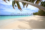 stock-photo-palm-trees-on-exotic-beach-14137537