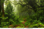 stock-photo-subtropical-forest-in-nepal-140999746