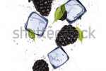 stock-photo-blackberries-with-ice-cubes-isolated-on-white-background-129076214