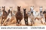 stock-photo-horses-herd-running-in-the-sand-storm-150670646