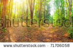 stock-photo-panorama-of-a-mixed-forest-at-summer-sunny-day-71706058