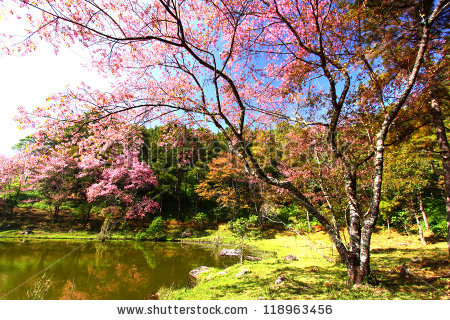 stock-photo-cherry-blossom-branch-118963456